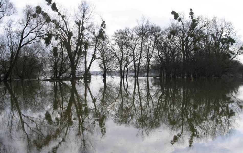 überflutete Elbwiese bei Steckby