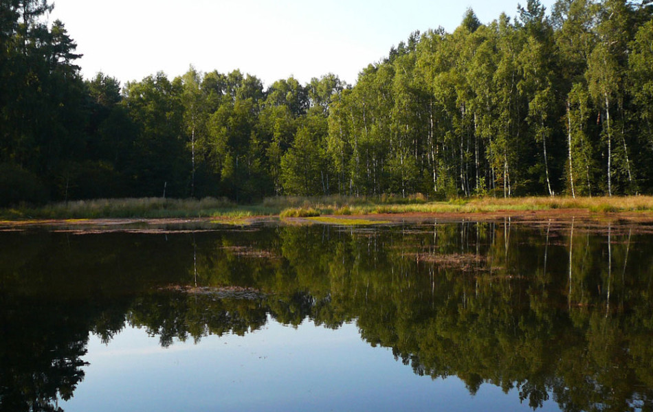 Dahlener Heide, südlicher Teil