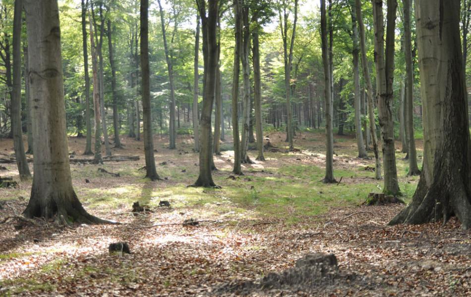 Dahlener Heide