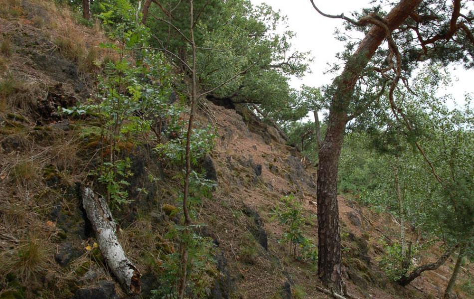 Eichentrockenwald am Hang der Striegis