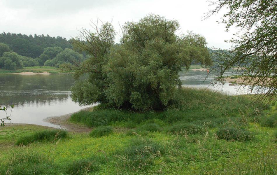 Elbe abwärts Aken