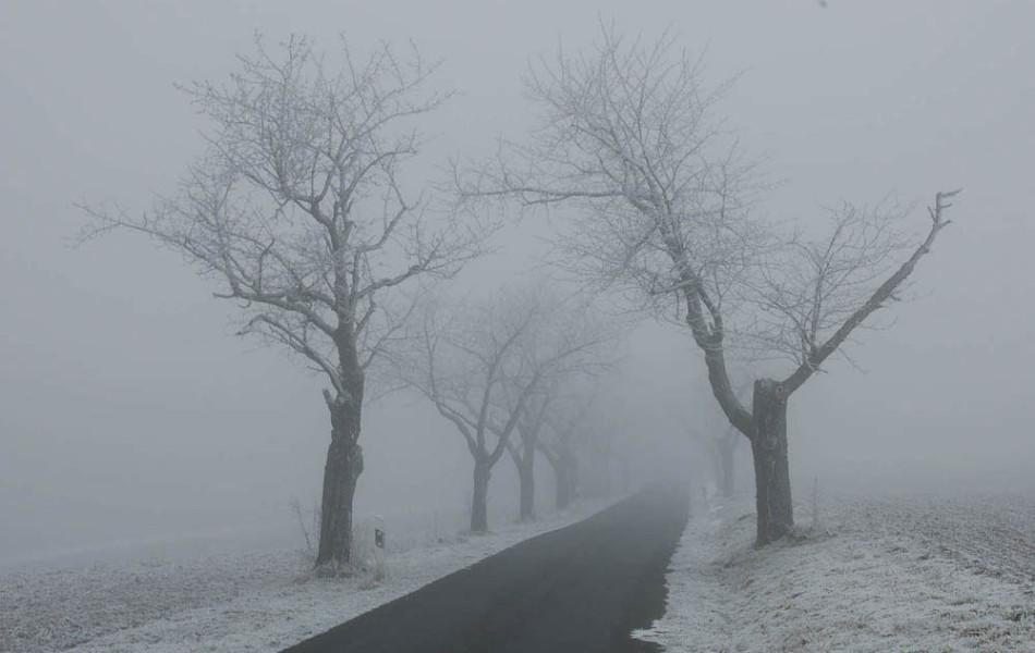 Kirschallee im Nebel