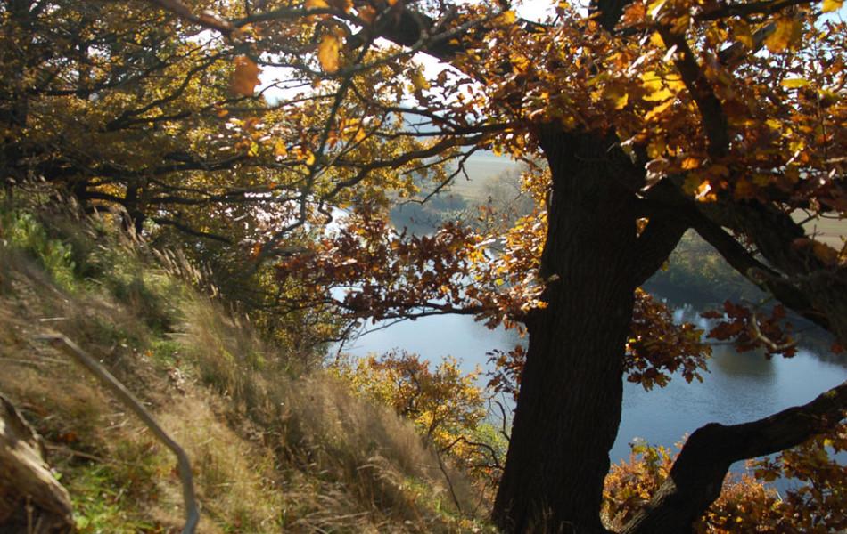 Loreley, felsiges Ufer der Mulde bei Grimma