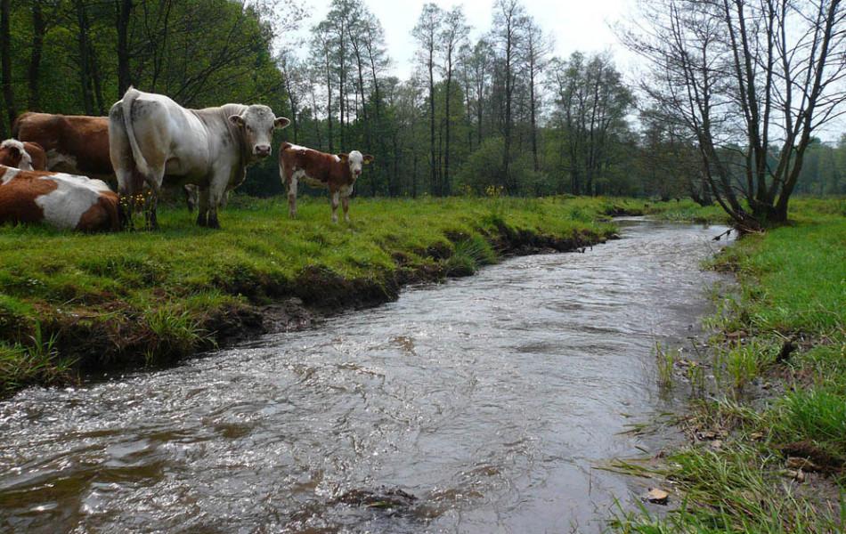 Ruhländer Schwarzwasser, sächsisch-brandenburgische Grenze