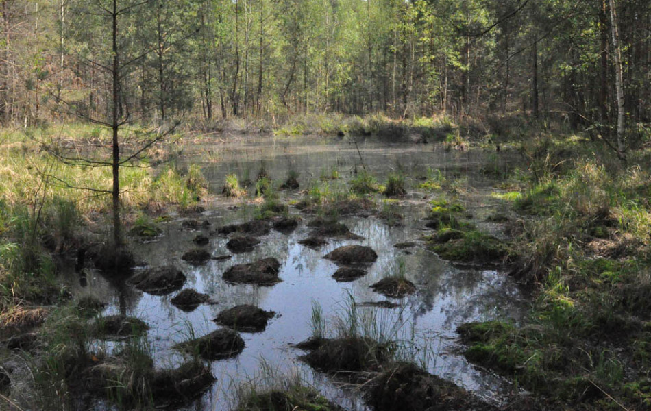 Waldmoor in der Oberlausitz